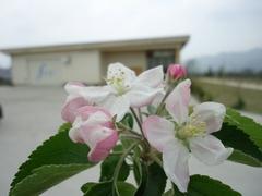 甘~い春の香り