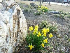 春はもうすぐそこまで来ています。