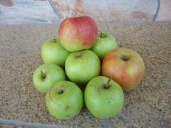 リンゴが大きくなってきました