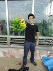 2房目のバナナの収穫