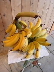 3房目のバナナが収穫出来ました。