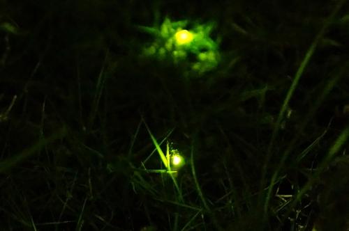 20180524_firefly_1.jpg